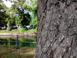 Test Wiko Jerry - sample-photo-10